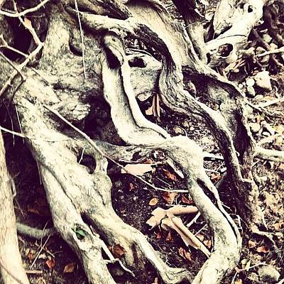 Roots Photographs