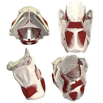 Designs Similar to Rotation Of The Thyroid