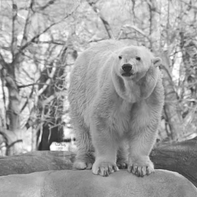 Philadelphia Zoo Mixed Media
