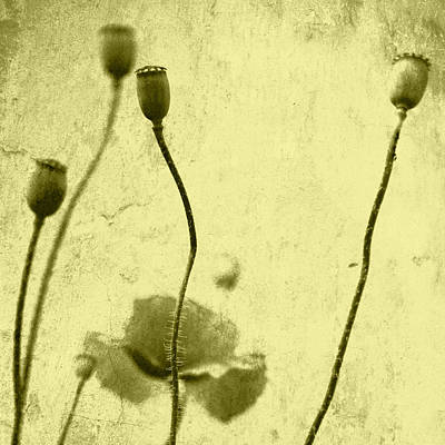 Designs Similar to Poppy Art Image