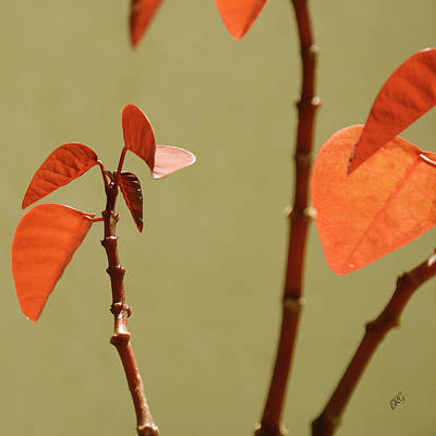 Designs Similar to Copper Plant 2