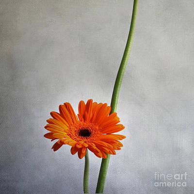 Designs Similar to Orange Gernera