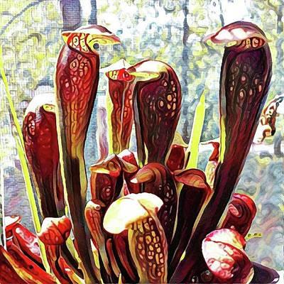Carnivorous Plants Art
