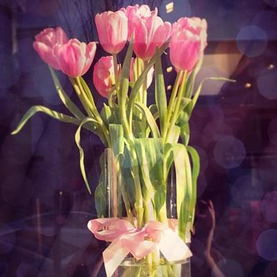 Tulips Photographs