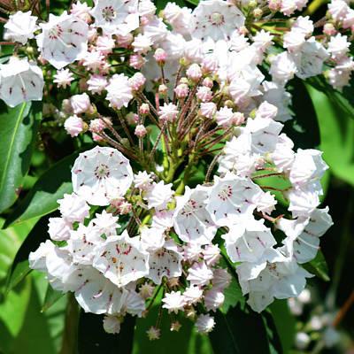 Designs Similar to Pretty White Flowers