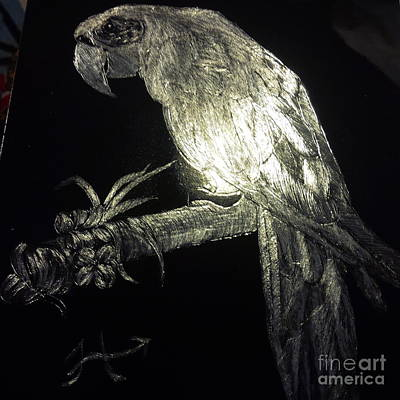 Designs Similar to Scratch Board Parrot