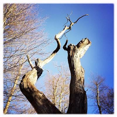 Designs Similar to Tree by Matthias Hauser