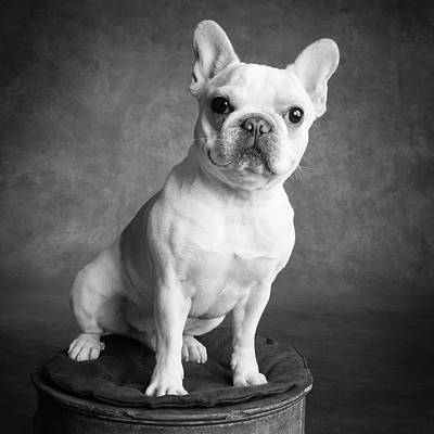 Designs Similar to Portrait Of A French Bulldog