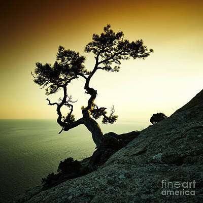 Designs Similar to Tree And Sea At Sunset. Crimea