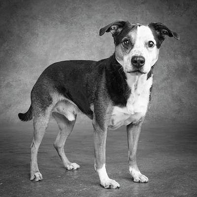 Designs Similar to Portrait Of A Mixed Dog