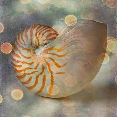 Designs Similar to Bokeh Nautilus Shell
