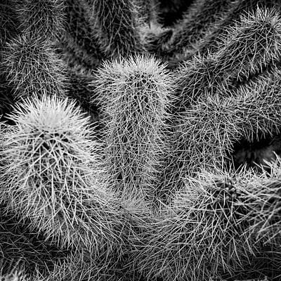 Designs Similar to Cactus Southwestern Decor
