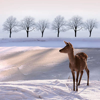 Designs Similar to Deer Doe And  Snowy Landscape
