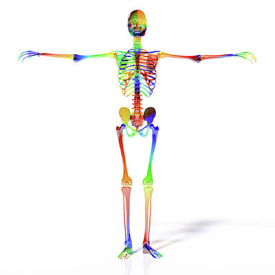 Designs Similar to Human Skeleton Model