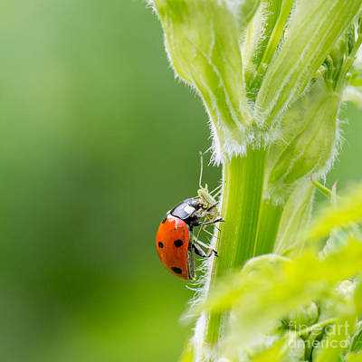 Coleoptera Art