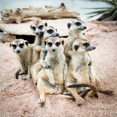 Designs Similar to Suricate Or Meerkat Family