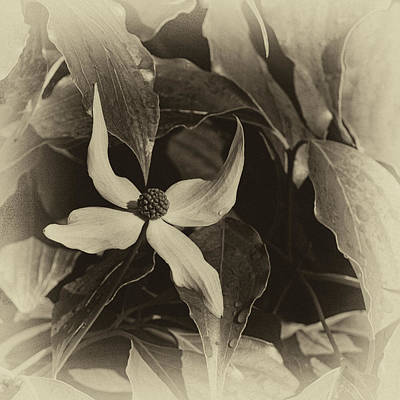 Designs Similar to Vintage Dogwood by Denise Harty