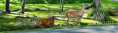 Photograph - Deer Crossing by Cornelia DeDona