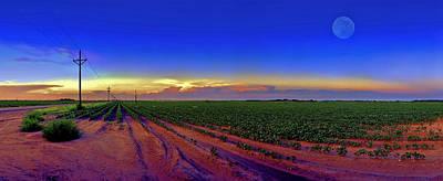 Cotton Field Photographs