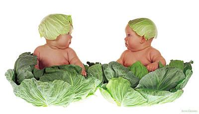 Cabbage Photographs
