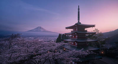 Sakura Wall Art