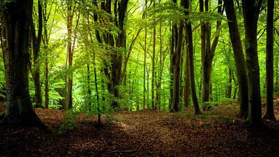 Woodland Photographs