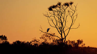 Photograph - Sunset Egret in Silhouette by Donald Rogers