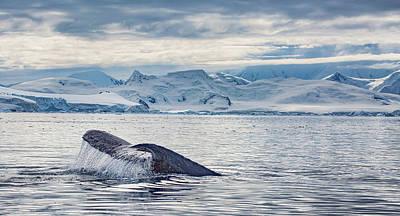 Photograph - The Big Catch by Millner Stephanie