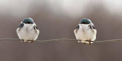Bird On A Wire Photographs