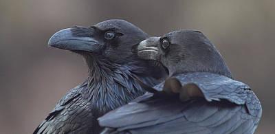 Corvus Corax Art