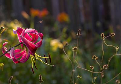 Bee Yard Photographs