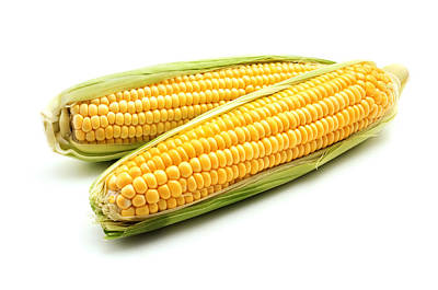 Corn On The Cob Art