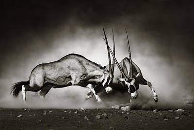 Gazelle Photographs