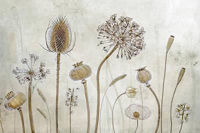 Seed Head Art