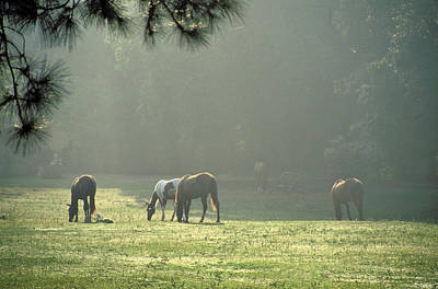 Designs Similar to Horses In The Fog