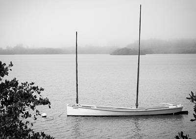 Photograph - Lizzy in the Mist by Robert Winch