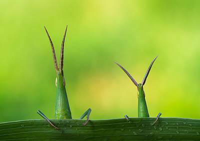 Grasshopper Photographs