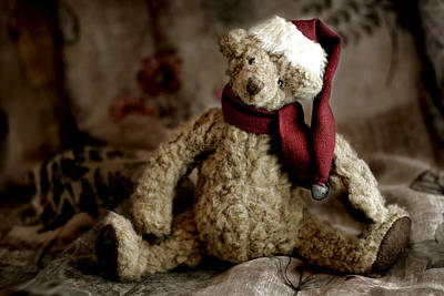 Stuffed Animal Photographs