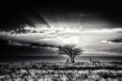 Hartebeest Photographs