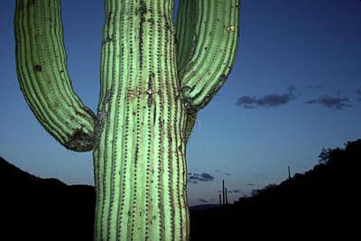 Coronado National Forest Photographs