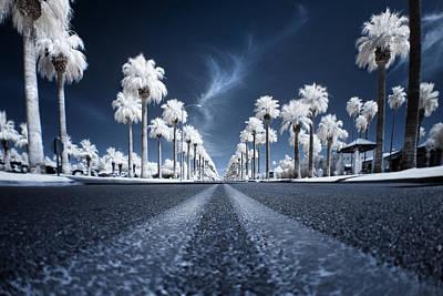 Palm Photographs