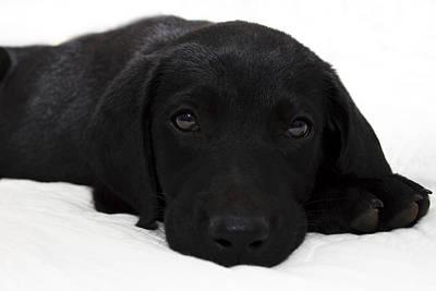 Custom Pet Portrait Photographs