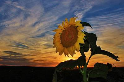 Photograph - A Giant Sunflower and Sunset Sky in Kansas by Greg Rud