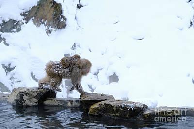 Photograph - baby Snow Monkeys of Jigokudani  by Carmin Wong