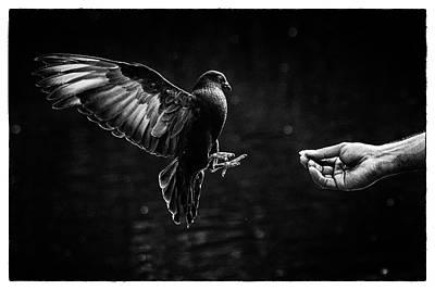 Photograph - Bird Beauty by M Nuri Shakoor