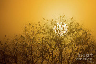 Photograph - Blackbird silhouettes at sunrise, Merced NWR , Los Banos, Calif by Donald Quintana