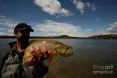 Photograph - Brown Trout and Blue Skies - Australia by Julian Wicksteed