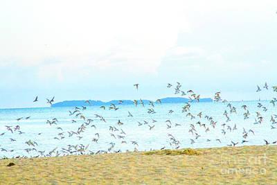Photograph - Devil's Island  by Carmin Wong