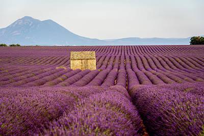 Photograph - Endless Lavender by Joseph Plotz