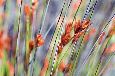 Photograph - Grass Seeds by Martin Heigan